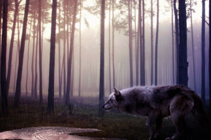 Howling <b>Wolf Wallpapers</b> - <b>Wallpaper<