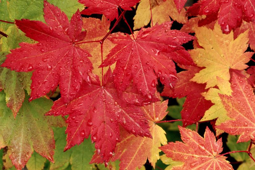 Autumn Desktop Mac Background | Nature Wallpapers | Mac Wallpapers HD .