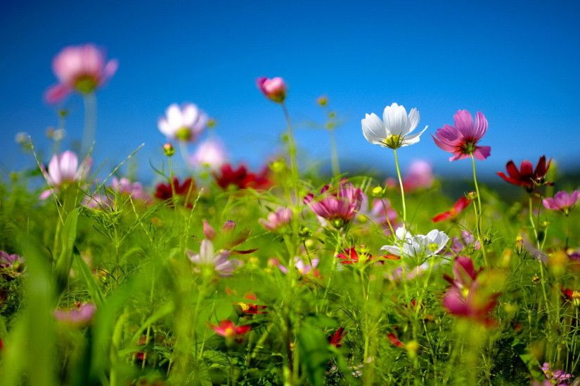 Free Spring Desktop Wallpaper | ... Download free Spring wildflowers Desktop  background and wallpapers