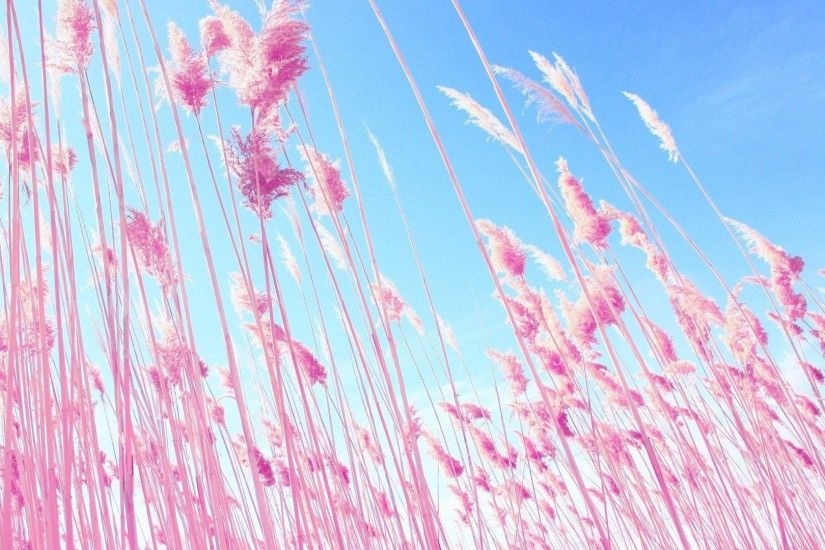 1920x1080 Dreamy Tag - Dreamy Macro Nature Plants Grass Pink Hd Wallpapers  1080p Widescreen Download for