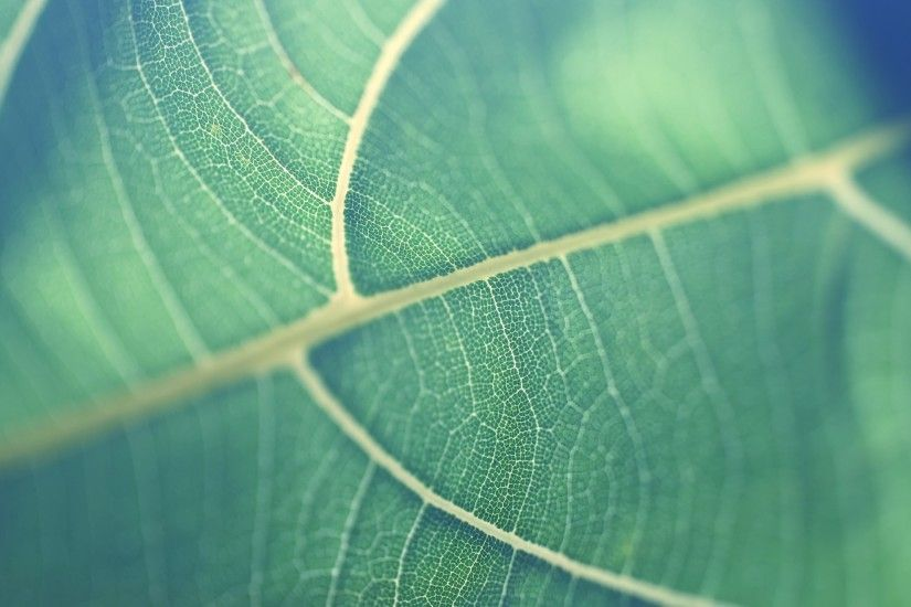 Earth - Leaf Wallpaper
