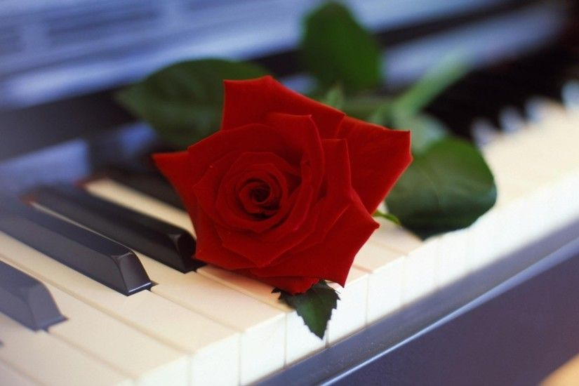 Preview wallpaper rose, flower, piano, music 1920x1080