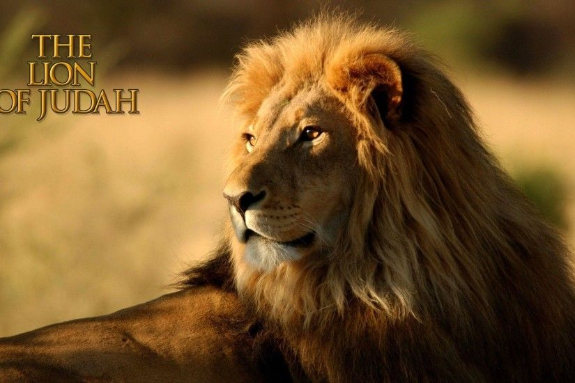 The Lion Of Judah HD Wallpaper | Christian Wallpapers