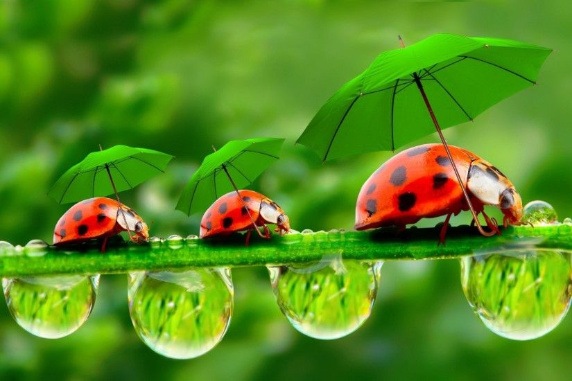 ... Insect HD Funny Wallpapers ~ Funny Wallpapers ...