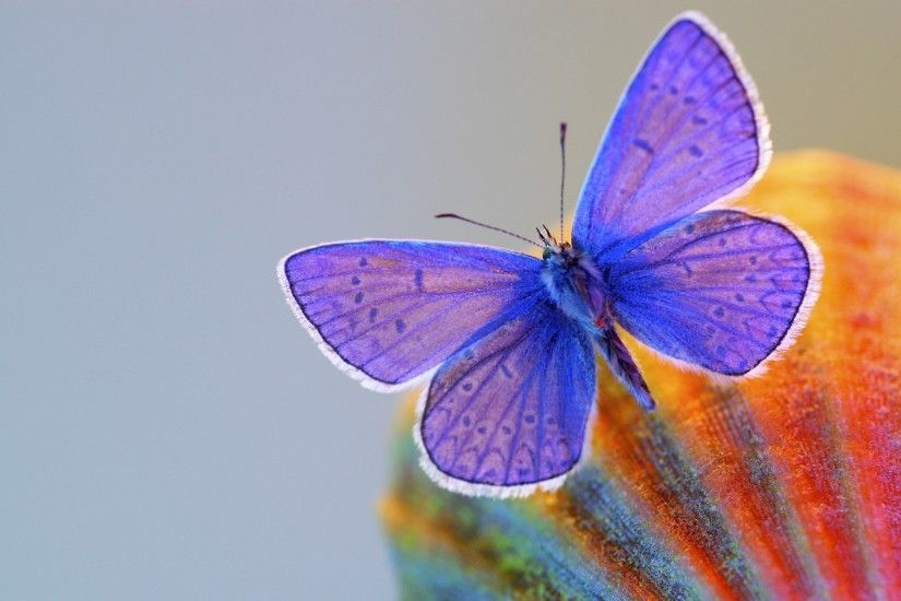 1920x1200 Dimensions:1920x1200 1680x1050 1440x900 1280x800. Cool HD  wallpaper - Abstract Nature Butterfly .