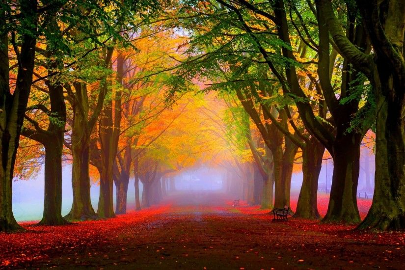 Fall Foliage Wallpapers Free Download.