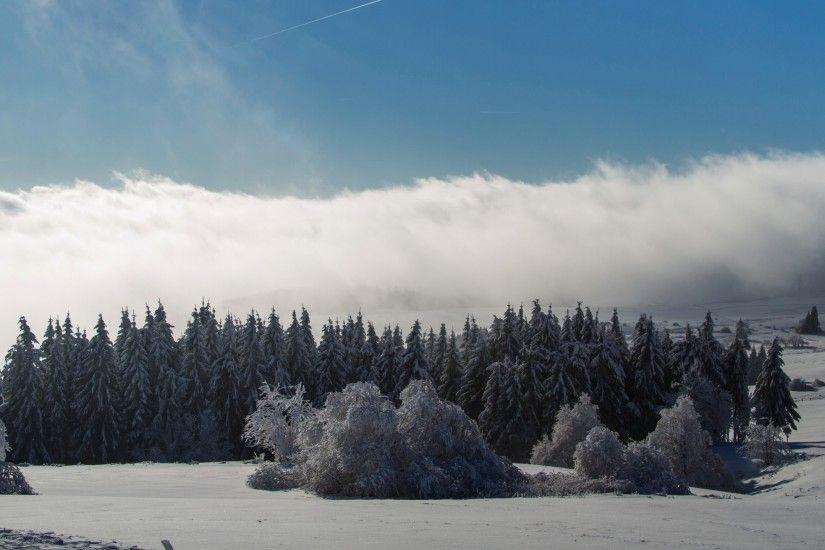 2560x1440 Wallpaper wasserkuppe, mountain, forest, winter, snow, storm