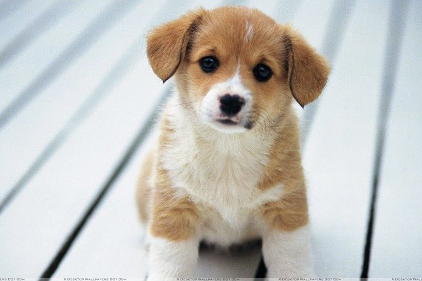 Cute Puppy Images Wallpapers (40 Wallpapers)
