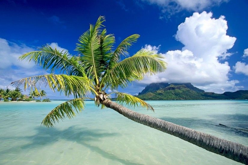 Computer Tropical Wallpapers Desktop Backgrounds xpx Id 1920×1200