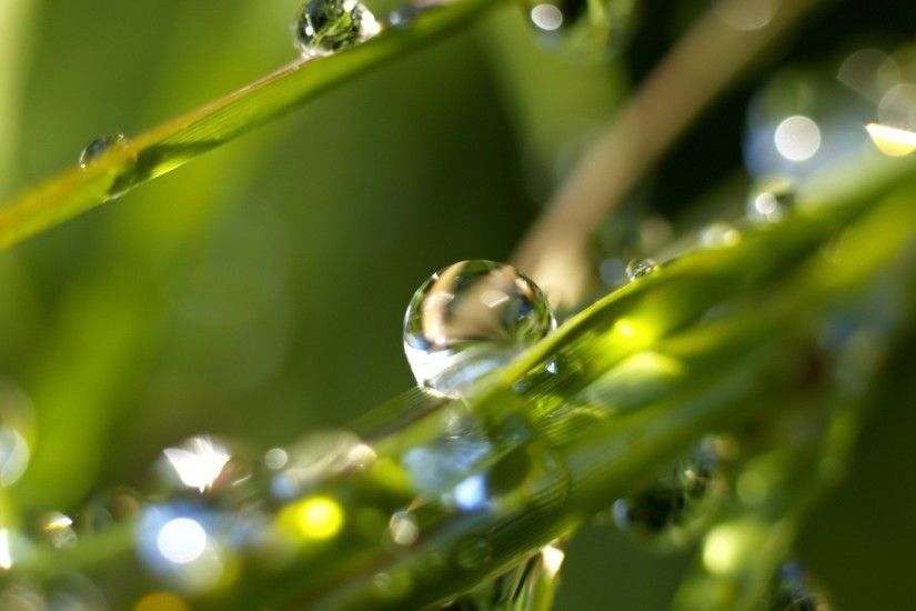Rain drops Wallpaper Plants Nature Wallpapers