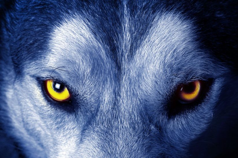Wolf Wallpapers HD A42