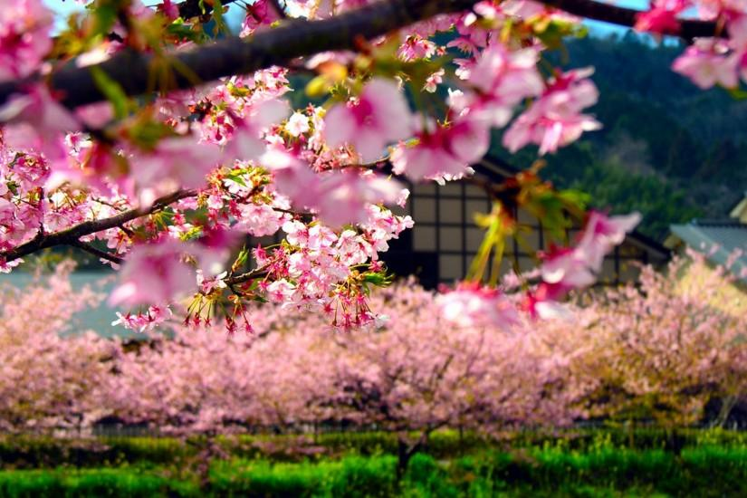 beautiful japan wallpaper 1920x1200