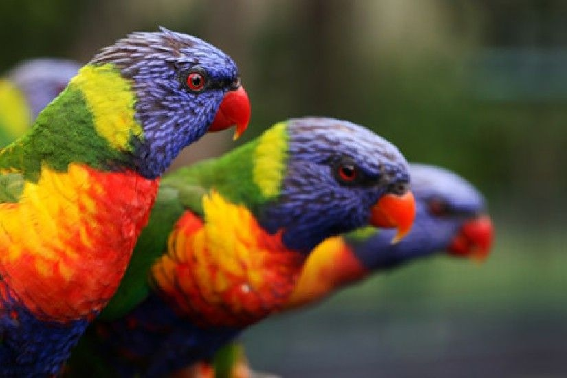 parrot hd 1080p desktop wallpaper 0021