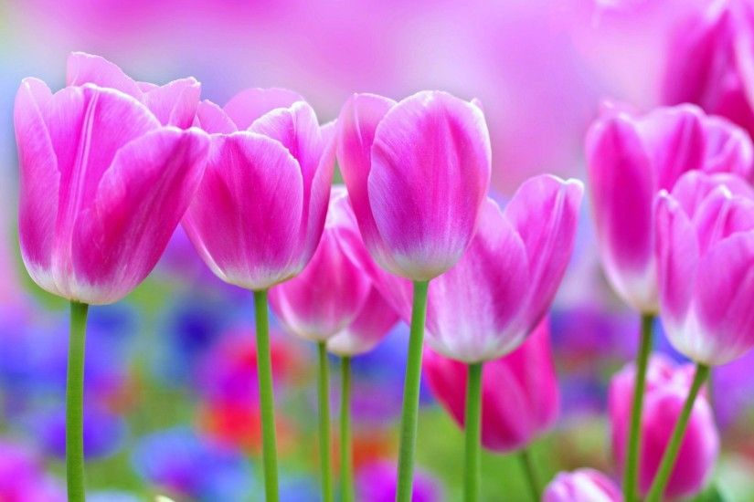 beautiful flowers wallpaper Archives - Wallpaper HD Free Wallpaper .