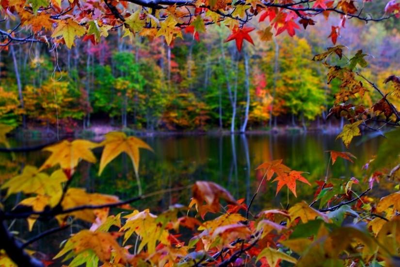 Autumn Leaves Frame Wallpaper | High Quality Wallpaper