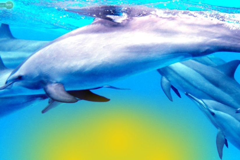 Best Dolphin Wallpapers and Backgrounds