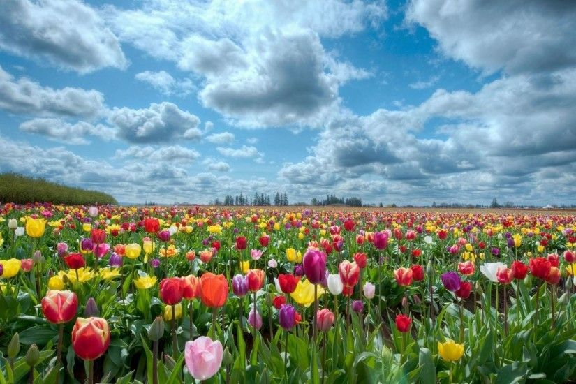 HD-wallpapers-field-of-flowers-background
