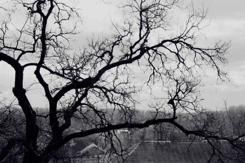 Preview wallpaper tree, branches, black-and-white, roof, terribly,