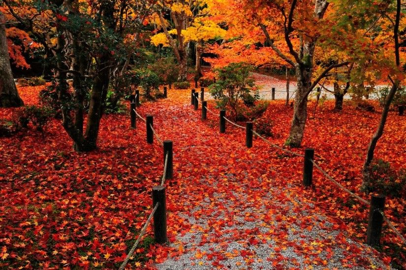 Red Fall Leaves Wallpapers Widescreen