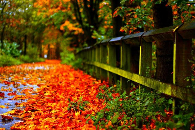 Autumn Leaf - Wallpapers
