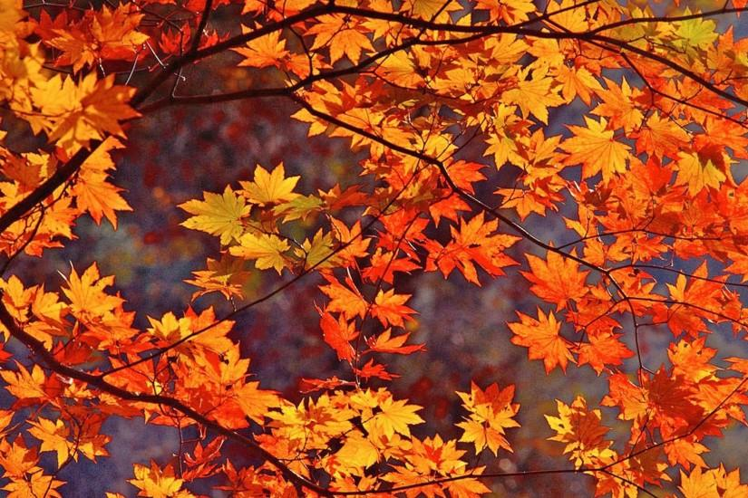 Fall Leaves HD Wallpaper