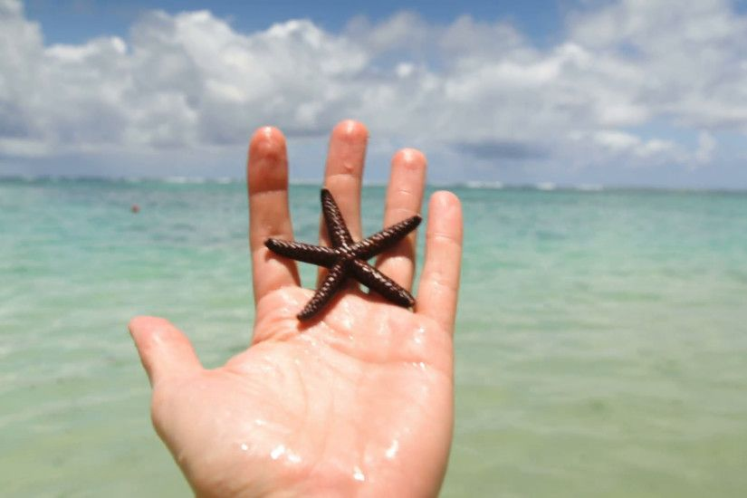 Hand holding starfish with beach in background Stock Video Footage -  VideoBlocks