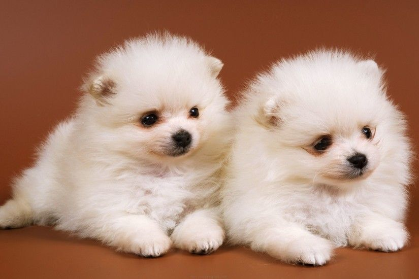 Cute Baby Dog Wallpaper (11 Wallpapers)