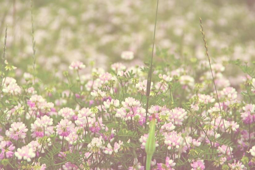Field Of Flowers Vintage Flower Tumblr