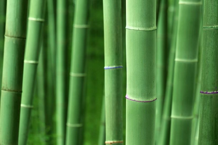 bamboo background 1920x1200 for 4k monitor