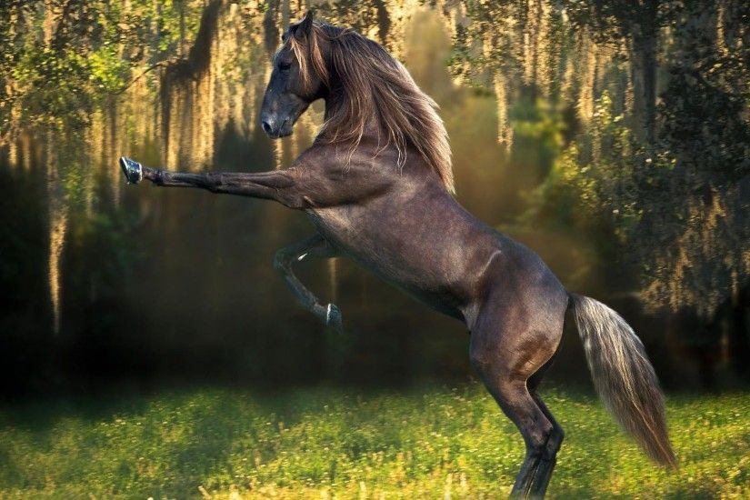 Wallpapers For > Horse Wallpaper For Bedroom