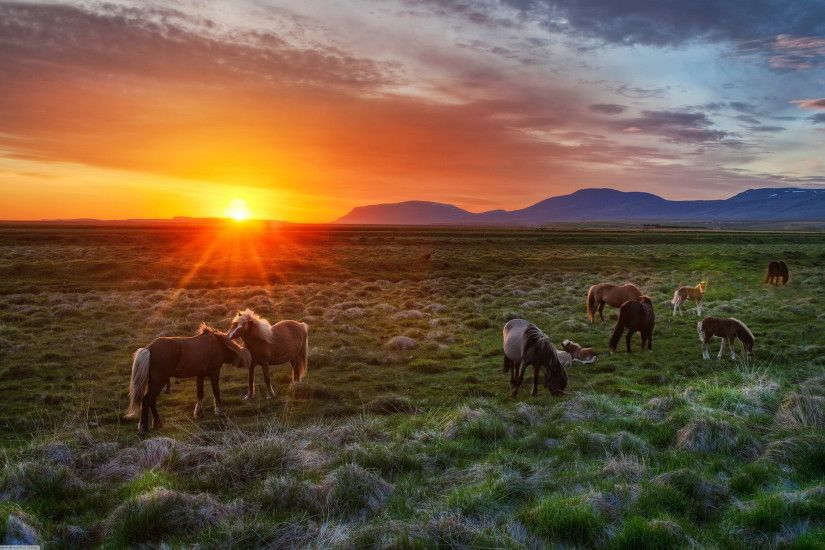 Horse wallpaper | Wild horses sunset Wallpapers Pictures Photos Images