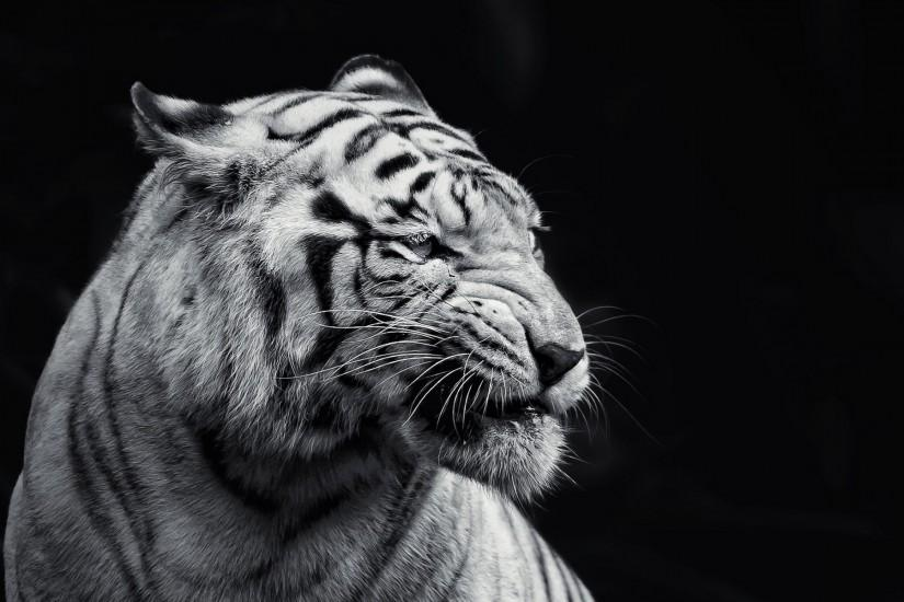 190 White Tiger HD Wallpapers | Backgrounds - Wallpaper Abyss - Page 5 |  Download Wallpaper | Pinterest | Backgrounds, Wallpapers and Wallpaper  backgrounds