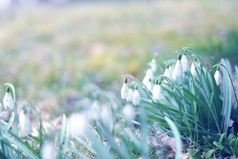 Preview wallpaper spring, snowdrops, grass, light, march 2560x1440