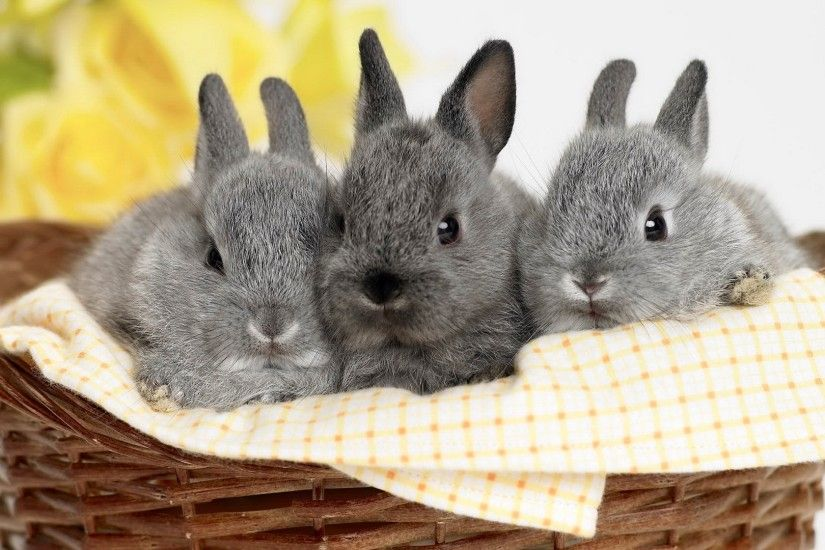 Free Cute Bunny Images Â« Long Wallpapers ...