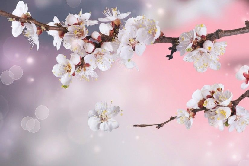 Cherry Blossom Backgrounds Wallpaper 1600×900 Cherry Blossom Tree  Backgrounds (17 Wallpapers) | Adorable Wallpapers | Desktop | Pinterest |  Blossom trees, ...