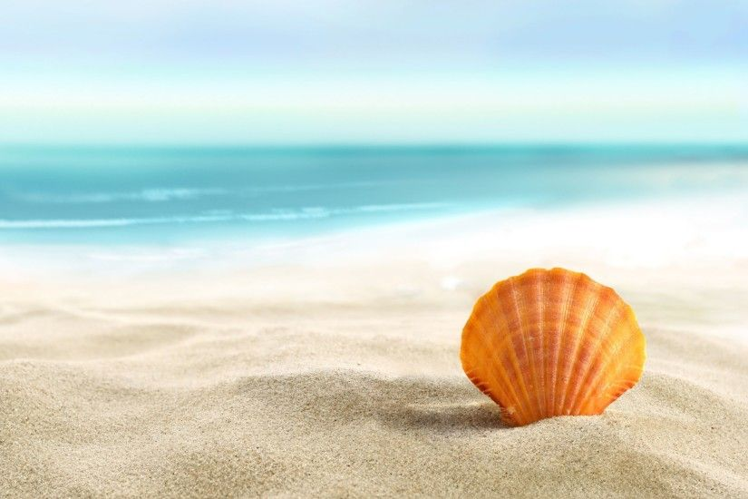 Lost Seashell 4K Wallpaper | Free 4K Wallpaper