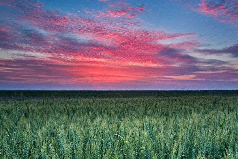 1920x1080 Green wheat and sunset wallpaper wide wallpapers :1280x800,1440x900,1680x1050 - hd