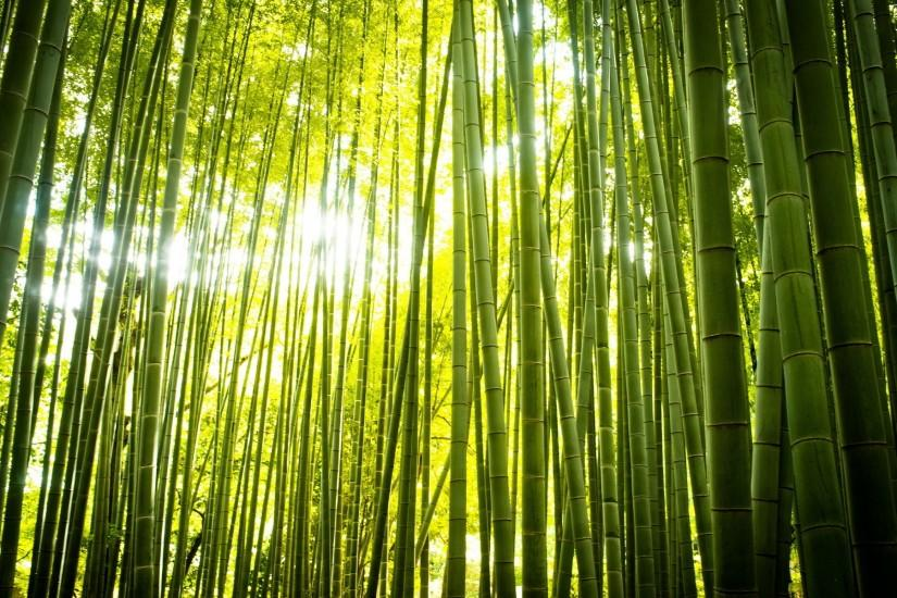 Free Desktop Bamboo Backgrounds.