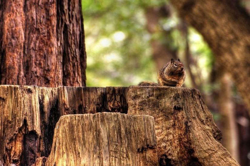 hd pics photos best cute squirrel tree nature beautiful hd quality desktop  background wallpaper