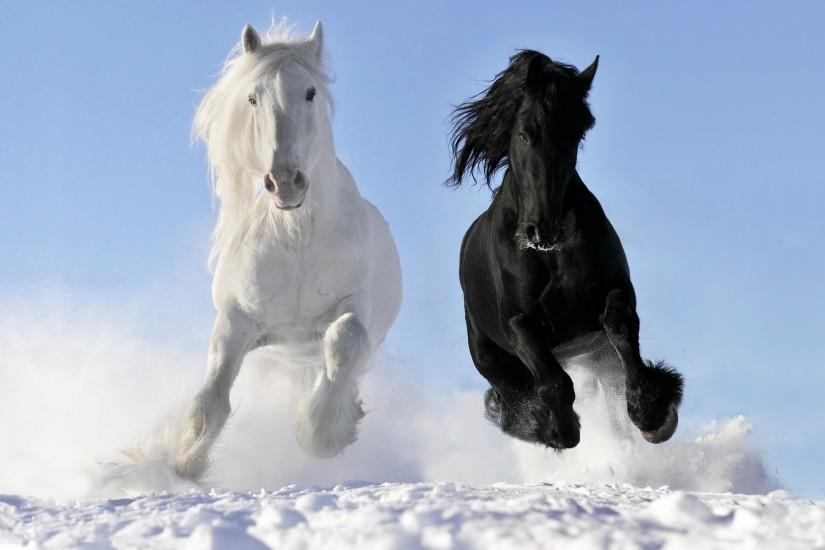 free download horse wallpaper 2560x1600 for android 50