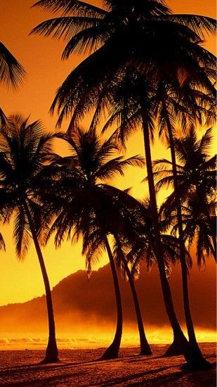Nature Sunset Beach Coconut Grove #iPhone #6 #plus #wallpaper