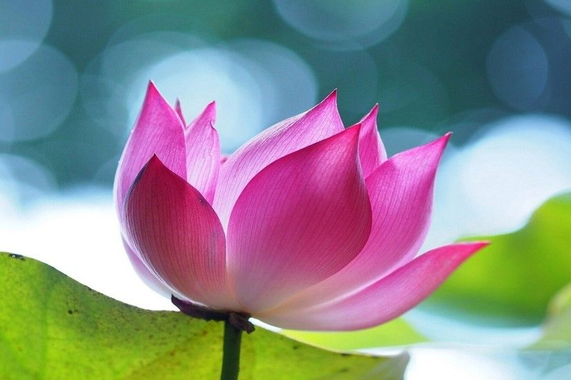 <b>Lotus Flower Wallpapers</b> - Android Apps on Google Play