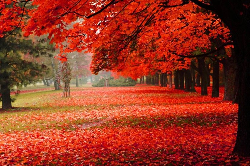 Beautiful Autumn Desktop Backggrounds