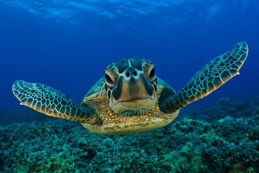 1920x1080 Wallpaper turtle, swim, shell, underwater