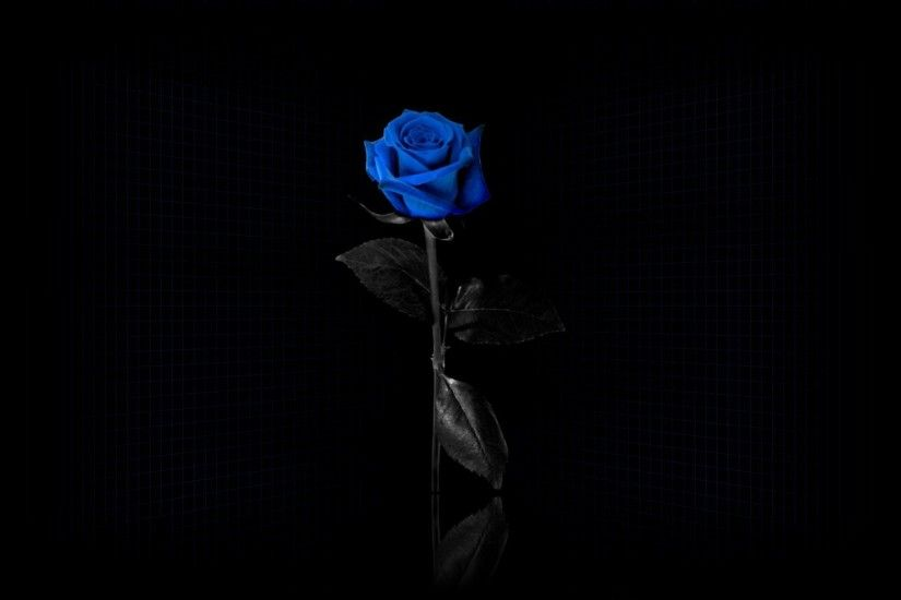 blue Rose, Flowers, Minimalism, Selective Coloring, Simple Background, Blue  Flowers Wallpapers HD / Desktop and Mobile Backgrounds