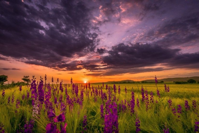 night summer sunset sky sun the field flower