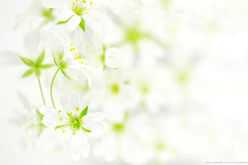top flowers background 2560x1600