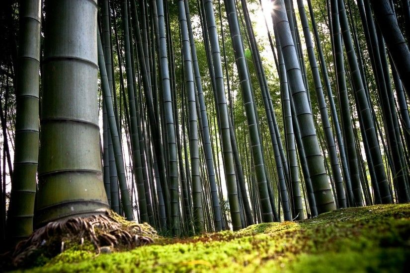 High Definition Wallpapers – HD 1920×1080 » Bamboo Trees Forest