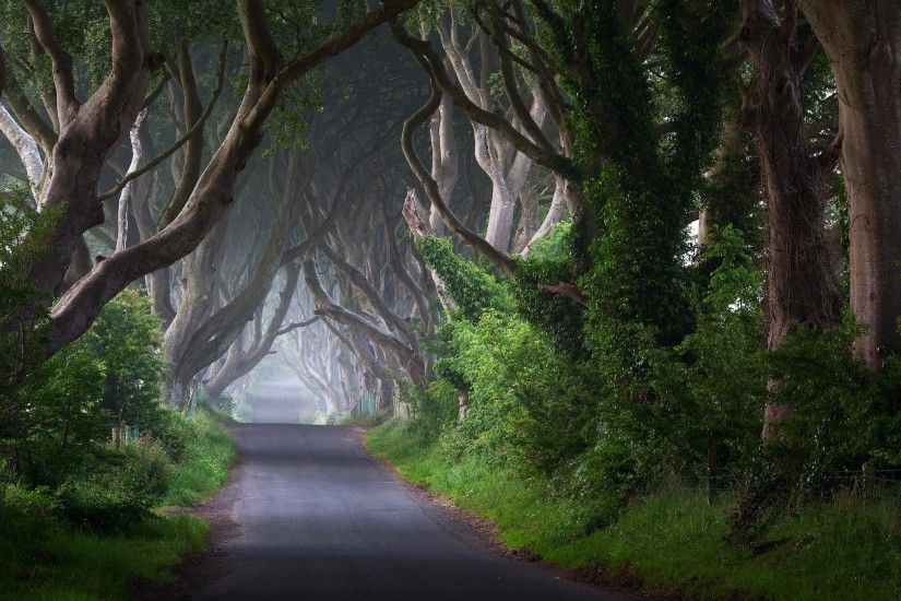 wallpaper, widescreen, trunks, road, mist,ireland,free images, trees