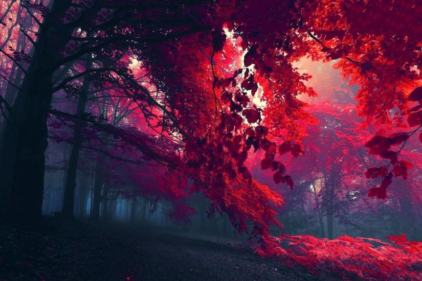 Autumn red foliage Wallpaper in 1920x1200 Widescreen